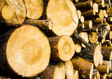 Logs. The cut down trees combined against each other (the combined logs, focus on the left log Royalty Free Stock Photography