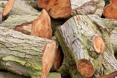 Logs. Detailed image of a pile of chopped logs Royalty Free Stock Photos