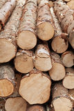 Logs. Pile of logs - natural resources management stock photography