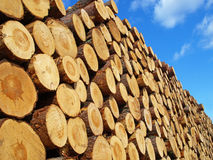 Logs. A huge pile of logs stock photography