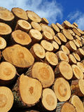 Logs. A huge pile of logs stock images