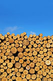 Logs. A pile of logs with open space for copy text royalty free stock image