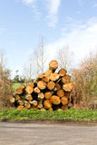 Logs. Pile of logs after being chopped Stock Image