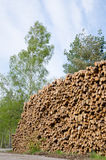 Logs. In a big stack in green enviroment Stock Photos