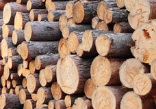 Logs. A pile of logs in the open air Royalty Free Stock Image