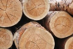 Pine logs Stock Images