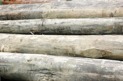 Logs. The pile of logs background Stock Photos