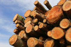 Logs. Freshly cut timber logs stacked for transportation royalty free stock photos