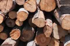 Logs Imagens de Stock