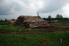 logs photo stock