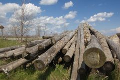 Logs. A pile of logs with sky in background royalty free stock images