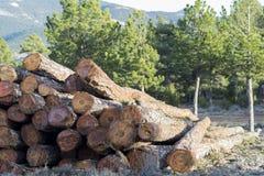 logs photos stock