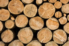 Logs. Closeup of tree logs, Germany Stock Photo