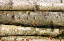 Logs. Stack of horizontal silver birch logs Royalty Free Stock Photography