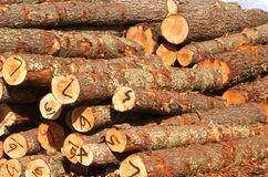 Logs. Timber in the lumber yard Stock Photography
