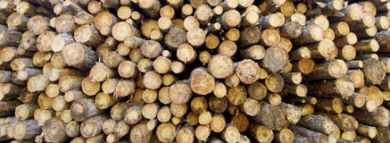 Logs. Trunks of trees cut for firewood Stock Image