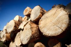 Logs against blue sky Stock Image