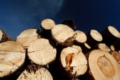 Logs against blue sky Royalty Free Stock Images