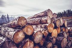 Logs against a gloomy sky Stock Image
