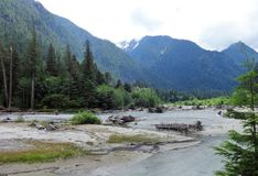 Free Logs At A Bank Of Baker River In North Cascades Stock Photos - 97915233
