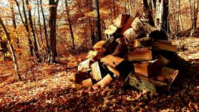 Logs in Autumn Royalty Free Stock Image