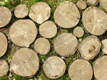 Logs Background. Stumps stock photography