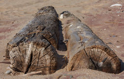 Logs on a Beach. Logs washed up on a sandy beach Stock Photos