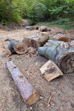 Logs of beech Royalty Free Stock Image