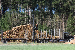 Logs Being Loaded for Transfer Royalty Free Stock Image