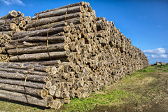 Logs. A big amount of logs ready for shipping at Terceira Island, Azores Stock Photography