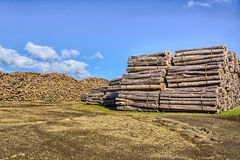 Logs. A big amount of logs ready for shipping at Terceira Island, Azores Royalty Free Stock Photos