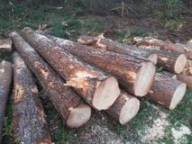 Logs. A bunch of logs of trees that were cut down royalty free stock photo