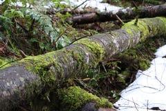 Logs caídos fotografia de stock