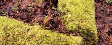 Logs caídos cobertos musgo com o marrom que deteriora as folhas caídas Imagem de Stock