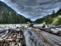 Logs in Canada. A huge collection of logs in a river in Canada Royalty Free Stock Images
