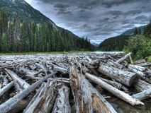 Logs in Canada. A huge collection of logs in a river in Canada Royalty Free Stock Photo