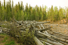 Logs cast ashore by a fast-moving river in alaska Stock Photos