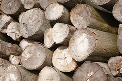 Logs close up. Closeup of felled logs stacked in a pile Royalty Free Stock Photo