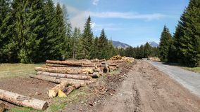 Logs colhidos da madeira, ao lado de uma estrada de floresta com montanhas dentro fotografia de stock royalty free