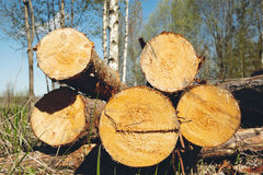 Logs Royalty Free Stock Photo