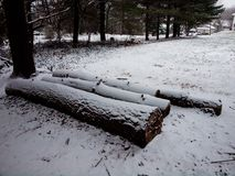 Logs covered with snow from first storm stock image