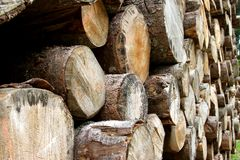 Logs cut by loggers in the mountain 3 Royalty Free Stock Photos