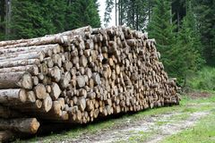 Logs cut by loggers in the mountains 1 Royalty Free Stock Images