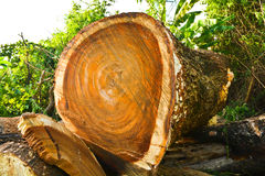 Logs cut from trees Royalty Free Stock Photo