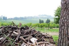 Logs da árvore Foto de Stock