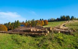 Logs da árvore Fotografia de Stock
