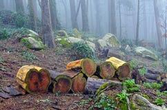 Logs da árvore Imagem de Stock