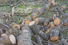 Logs da lenha com líquene foto de stock royalty free