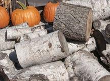Logs da madeira de vidoeiro Imagens de Stock Royalty Free