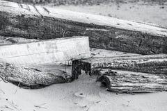 Logs da praia Imagens de Stock